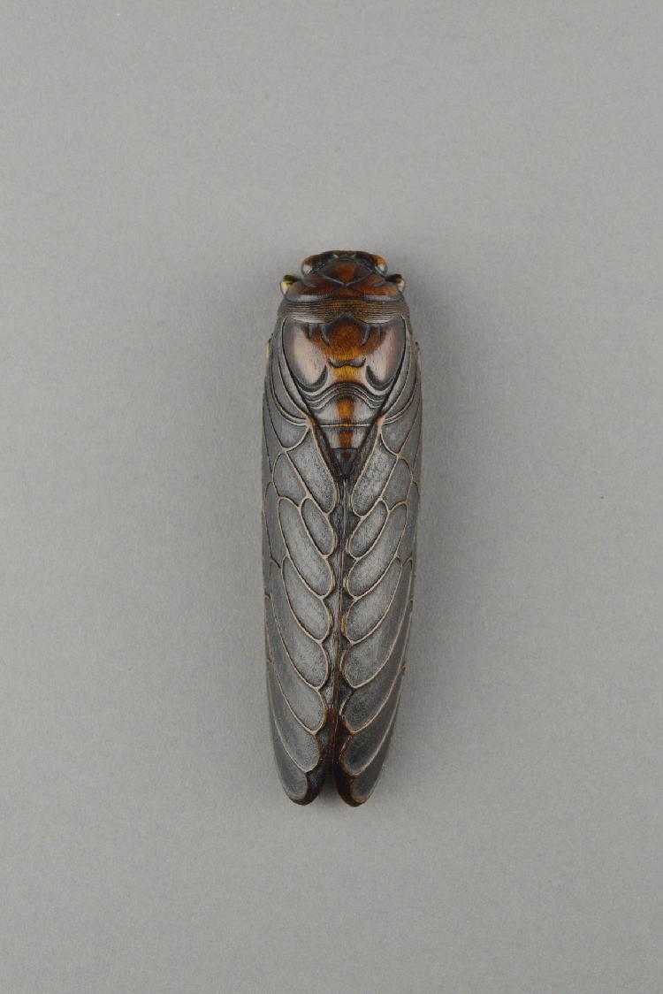 Rare Chinese Rhinoceros Horn Carved Cicada
