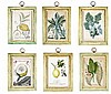 SET OF SIX EUROPEAN BOTANICAL ENGRAVINGS