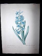 Redoute, Pierre Joseph 1827 Botanical Print from Choix des Plus Belles Fleurs. Jacinthe d'Orient. Hyacinthus Orientalis