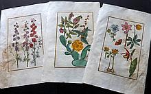 Rabel, Daniel 1771 Group of 3 Folio Hand Coloured Botanical Prints