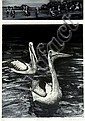PAMELA GRIFFITH (1943 - ), Limited Edition Hand Finished Etching and Aquatint, Title:  Pelicans, Signed Lower Right, Editioned Lower Left:  11/40, Titled Lower Centre