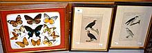 2 x antique hand coloured engravings, birds of