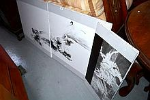 Triptych print on canvas showing birds of paradise