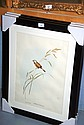 3 Gould bird prints, well framed and mounted