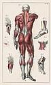 Salomon, Eduard und Aulich, Carl: Atlas der Anatomie des Menschen