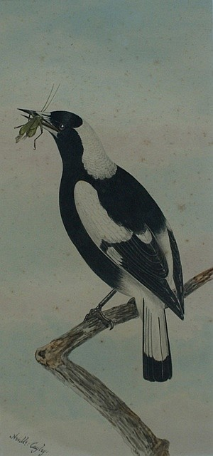 Neville Henry Pennington Cayley (1853-1903) Magpie watercolour
