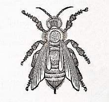 [Agriculture and Bees] Alamanni - Rucellai, 1718