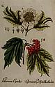 Bellermann (Johann Bartholomäus) Abbildung zum