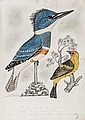 [Ornithology], manuscript commonplace book, 20pp.,