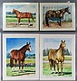 Robert Waddington, 20th c, American, faculty of PAFA, (4) w/c, portraits of horses, dated 1991, each 11 3/4