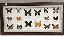 Framed Franklin County, VA Butterfly Collection