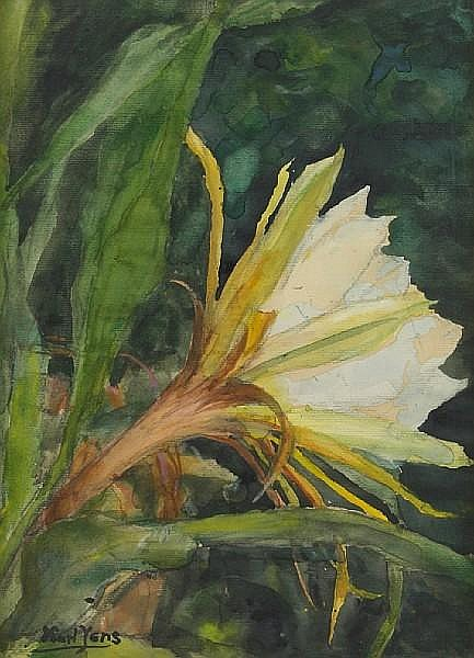Karl Yens (American, 1868-1945) Epihyllum, The flower of twenty four hours 14 x 10in