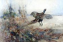 Frank Southgate (1872-1916) - Watercolour - Pheasant taking flight