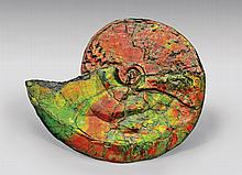 SUPERB CANADIAN IRIDESCENT AMMONITE