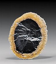 FINE PETRIFIED PALM SLICE