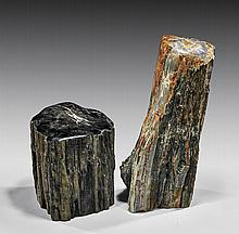 PETRIFIED WOOD PAIR