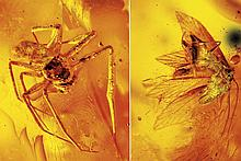 SPIDER AND WINGED ANT IN AMBER