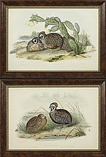 John Gould (1804-1881), and H.C. Richter (1821-1902),