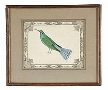 English Colonial School (19th century) - Ornithological studies