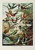 Haeckel (Ernst) - Kunstformen der Natur,