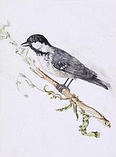 Attributed to Carl Wilhelm de Hamilton - A Coal Tit; a Black Capped Yellow Songbird,