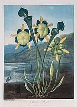 Thornton. Richard Cooper (1740-c.1814) - Pitcher Plant,