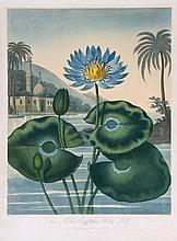 Thornton. Joseph Constantine Stadler (fl. late 18t - The Blue Egyptian Water-Lily,