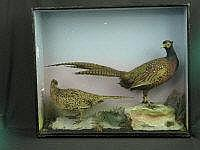 BRACE OF SPECIMEN PHEASANTS ON ROCKWORK, cock and