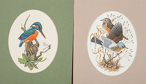 RICHARD MILLINGTON , KINGFISHER & FRIENDS (PAIR),