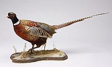 Pheasant full body mount