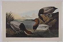 (4) Audubon / Amsterdam Edition lithographs