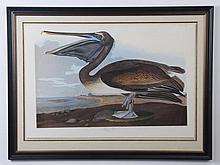 20th c. Framed Audubon / Amsterdam Edition