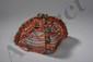 Coiffe traditionnelle, portée par les jeunes filles, composée de plusieurs rangs de perles de corail et turquoises.Laddakh.