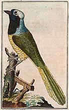 Buffon, G. L. L Naturgeschichte der Vögel. Bd. 7. Mit 48 altkol. Kupfertaf. Brünn, Traßler, 1788. 482 S., 5 Bll. Kl.-8°. Pp. d. Zt. mit 2 RSchd. (leicht berieben).