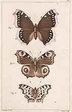 Papillon d'Europe Deckeltitel. 3 Bde. Mit zusammen 488 Kupfertafeln in Braun und Schwarz von Dumenil, Vauthier und Delarue. (Paris, um 1840). HLdrbde. d. Zt. mit RVerg. (etwas brieben).