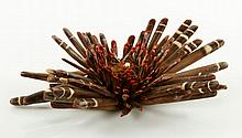 Dried Slate Pencil Urchin