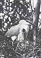 Wlodzimierz Puchalski 1909 Lemberg - 1979 - N...