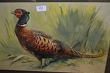 Attributed to Charles Whymper, two watercolours, studies of cock and hen pheasants, 13.5ins x 21ins, attributed verso, framed