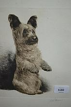 Framed etching, portrait of a dog, indistinctly signed, 12.5ins x 10ins