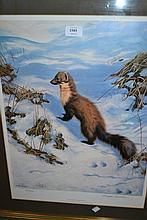 Douglas Anderson, signed Limited Edition colour print, pine marten, gilt framed