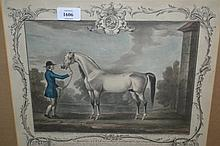 Set of four hand coloured stipple engravings after T. Spencer, by R. Houston of horses, gilt framed