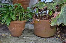 Large Collection of Terracotta Pots (Approximately 8) in Courtyard -