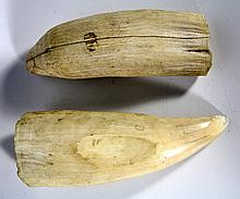Pr. Whale Teeth, Raw