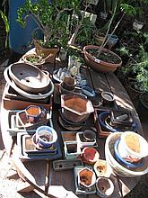 Quantity various Bonsai pots