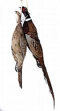 A BRACE OF PHEASANT preserved, suspended by a piec