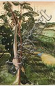 BRETT WHITELEY (1939-1992) Kurrajong 1981 oil, gouache, collage and branch on board