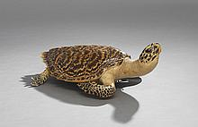 Taxidermied Sea Turtle