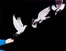 Pigeon Release by Harold Edgerton