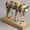 TAXIDERMY: TANZANIAN WILD DOG - Full mount male on wheeled museum base with environmental platform and marked with a plaque: