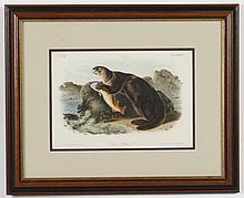 JOHN W. AUDUBON (1812-1862, USA) LITHOGRAPH ON PAPER - Hand-colored, titled